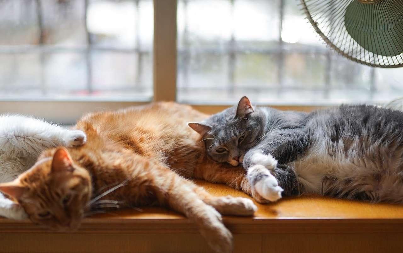 פירוש חלומות על חתול לפי הפסיכולגיה